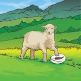 Palla di rugby della Nuova Zelanda delle pecore Immagini Stock Libere da Diritti