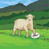 Palla di rugby della Nuova Zelanda delle pecore Fotografie Stock Libere da Diritti