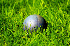 Palla in erba lunga Immagine Stock Libera da Diritti