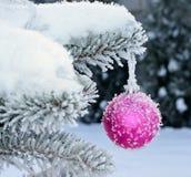 Palla rosa del nuovo anno sull'abete in tensione con gelo e neve fotografia stock libera da diritti