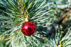 Palla rossa delle decorazioni di Natale grande sull'albero di natale all'aperto Immagini Stock
