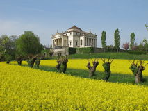 Palladio's Villa La Rotonda in spring with a rapeseed field. In Vicenza, Italy Royalty Free Stock Photography