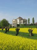Palladio's Villa La Rotonda with a yellow field of rapeseed in Vicenza, Italy Royalty Free Stock Images
