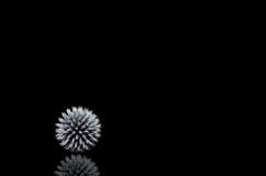 Palle con le spine 2 Fotografie Stock Libere da Diritti