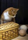 Palle del filo e del gatto della lana Immagini Stock Libere da Diritti