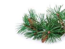 Palle di Natale, del nuovo anno e pino Fotografie Stock Libere da Diritti