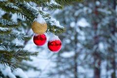 Palle di Natale sul ramo innevato del pino Fotografia Stock