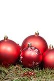 Palle rosse di Natale sul ramo di albero verde dell'abete Fotografia Stock