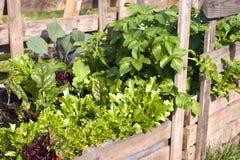 Pallet Garden Stock Image