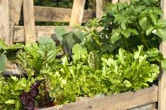 Pallet Garden Royalty Free Stock Image