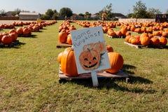 Some Pumpkins Royalty Free Stock Photos