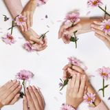Fashion art skin care of hands and pink flowers in hands of women  stock photography
