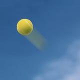 Pallina da tennis Immagine Stock