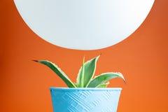 Pallone bianco che si libra sopra il cactus Fotografie Stock