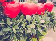 Palloni rossi del cuore con la pianta del rampicante Immagine Stock