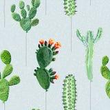 Palloni sotto forma di cactus Immagine Stock