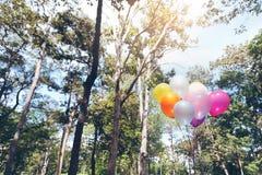 palloni variopinti con il cielo e gli alberi immagine stock