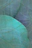 palmé bleu de fond d'aqua Photos stock