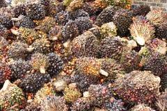 Palmöl-Früchte Stockfotografie