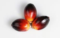 Palmöl-Startwert für Zufallsgenerator Lizenzfreies Stockfoto