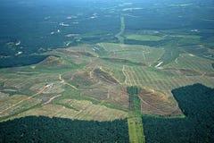Palmölplantagen Lizenzfreies Stockfoto