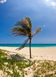 Palm #1. Palm tree on sea beach Royalty Free Stock Photos