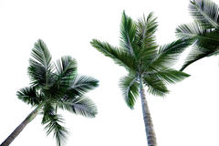 Palm Stock Photos