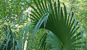 Palm. Leaf stock image