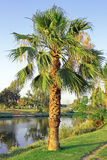 The palm. Near the quiet river Stock Image