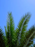 Palm. Tropical trees and details or scenics Royalty Free Stock Images