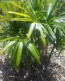 palm Royaltyfri Foto