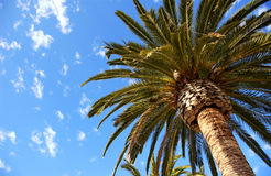 Palm. Looking up at a palm tree Stock Photo