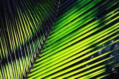 Free Palm Stock Photo - 12139860