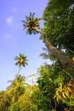 Palm Royalty Free Stock Images