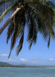 The Palm. Leaning over the sea in Cahuita National Park, Costa Rica Stock Photo