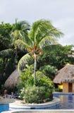Palm. Stock Foto's