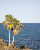Palm. A  palm tree with nice view of the sea Royalty Free Stock Photo