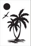 Palm Royalty Free Stock Image