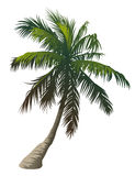 Palm Stock Photography