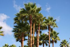 Palm Royalty Free Stock Photos