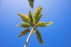 Palm 2 Royalty Free Stock Photos