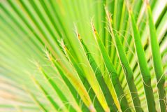 Palm 2 Stock Photography