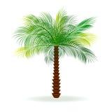 Palm stock illustratie