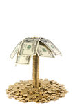 Palm. Of the dollars and coins isolated Stock Image