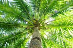 Palm Stock Image