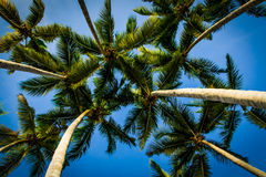 Palm. Trees on the beach Royalty Free Stock Images