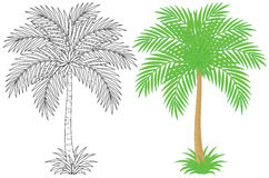Palm. Vector clip-art of a palm tree, color illustration and black-and-white outline on a white background Royalty Free Stock Photography