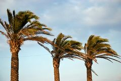 Palm. S on the coast of the islands Mallorca Royalty Free Stock Photo