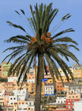 Palm. The palm tree and the multicolor houses as a background (La Gomera, Canary Islands Stock Photo