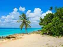 Palm. Tree and beach island Stock Photos